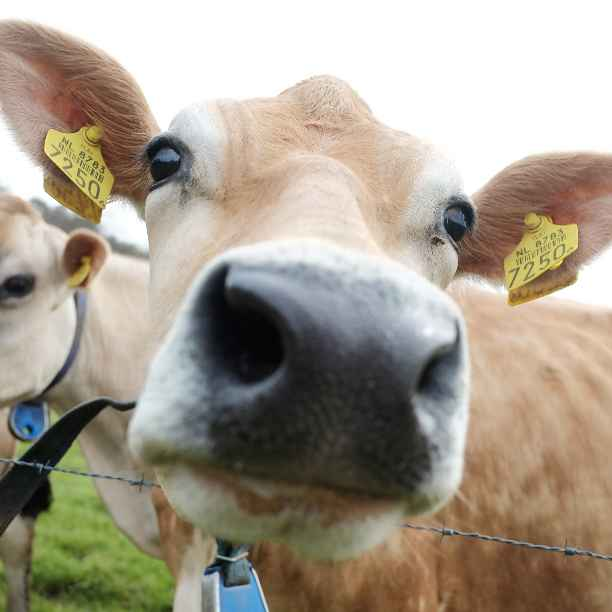 5 dingen die je mogelijk maakt door te beleggen in landbouw en voeding