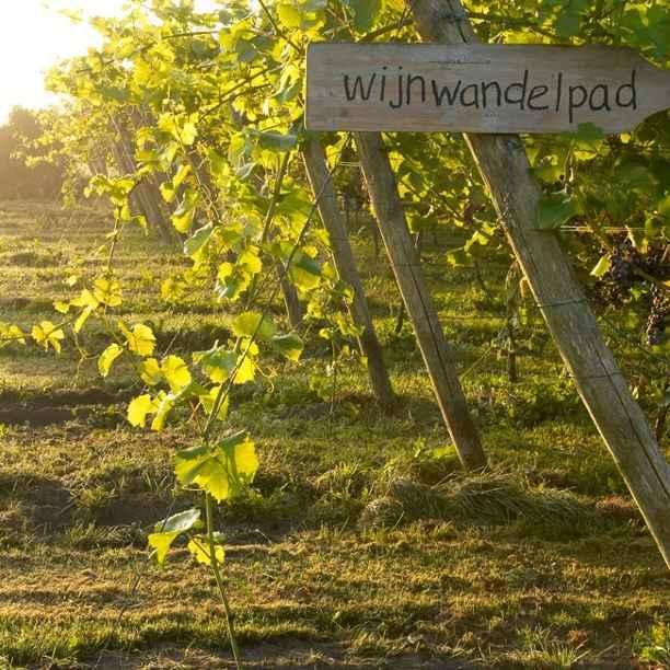 Hoe wijn van Nederlandse bodem voor uniek ondernemerschap zorgt