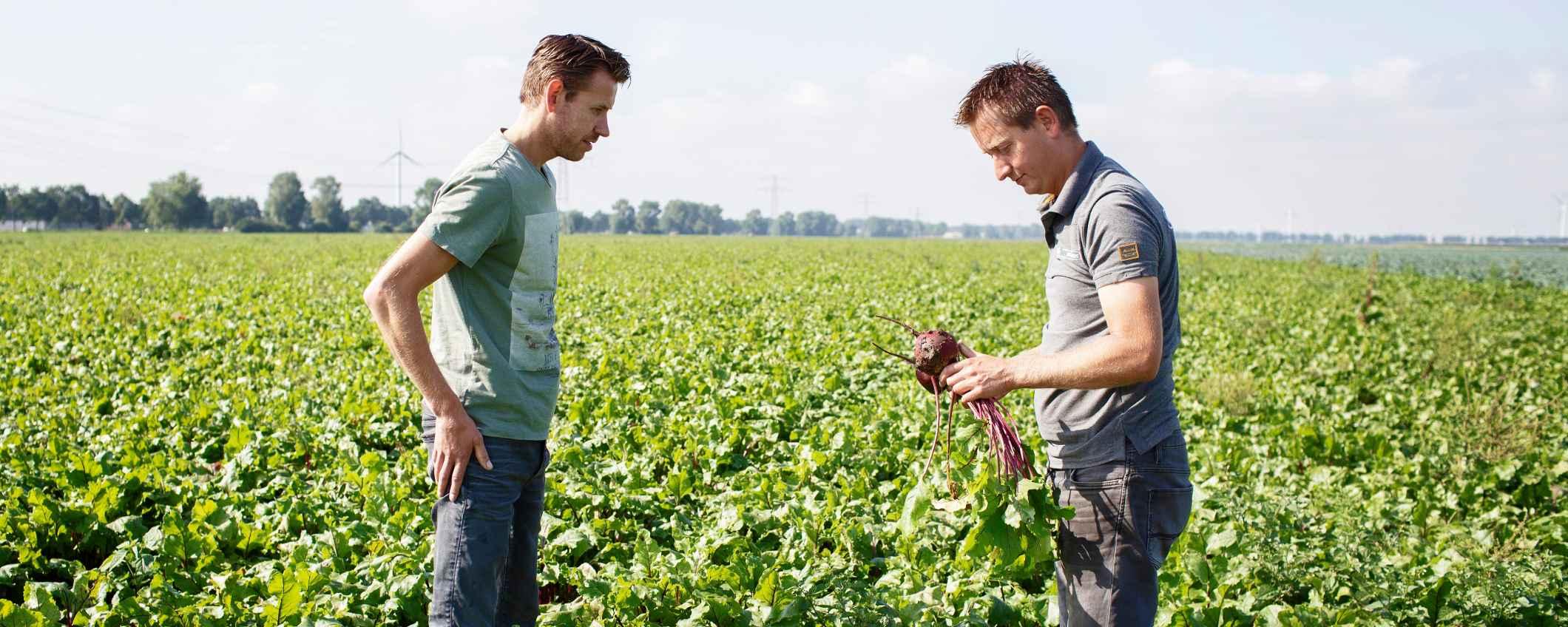 Johan en Wouter Snippe aan het werk in het weiland - Triodos Bank