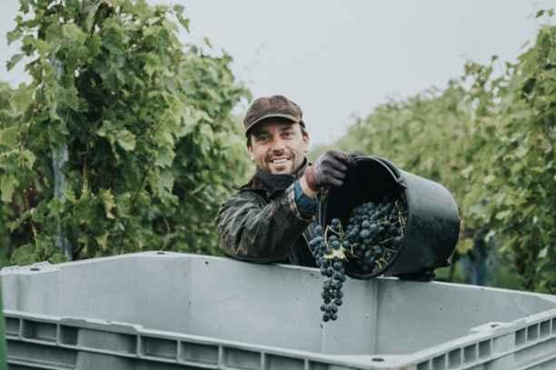 Wijngoed de Reestlandhoeve | Zuivere wijn voor mens en natuur