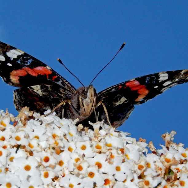 4 tips voor een vlindervriendelijke tuin vol biodiversiteit en waarom wij hierover schrijven