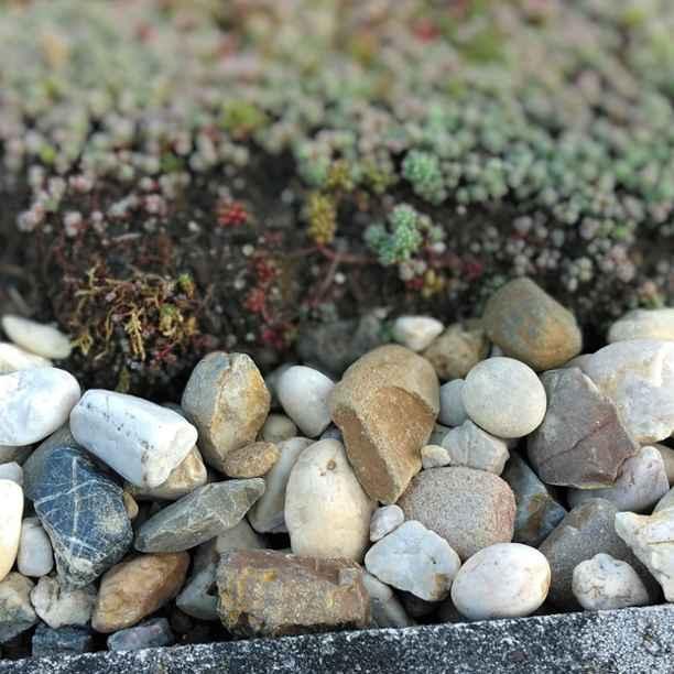 6x tips voor meer natuur in je tuin of op je balkon