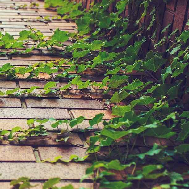 Dag tegels, hallo groen: 8 groene tuintips